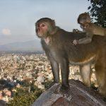 Заповедники Непала