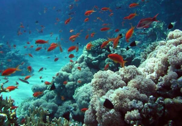 Бермудские острова. Туры круглый год