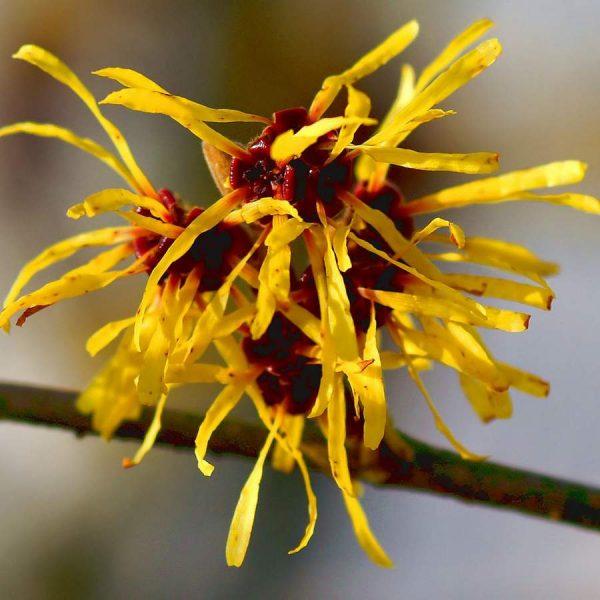 Цветы от FunFlowers